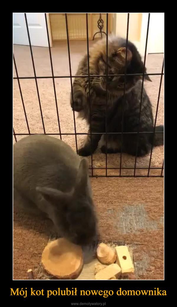 Mój kot polubił nowego domownika –