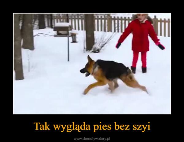 Tak wygląda pies bez szyi –