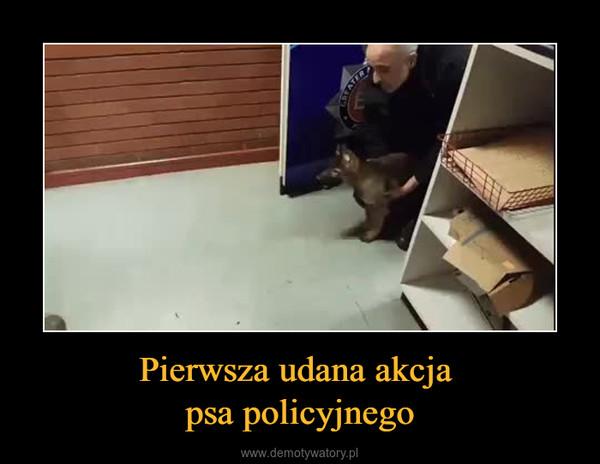 Pierwsza udana akcja psa policyjnego –