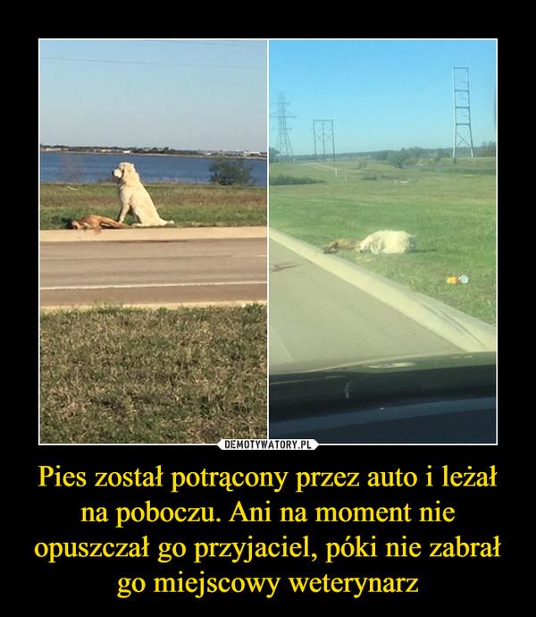 Pies został potrącony przez auto i leżał na poboczu. Ani na moment nie opuszczał go przyjaciel, póki nie zabrał go miejscowy weterynarz –