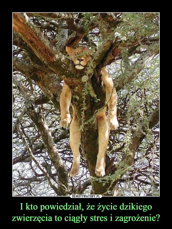 I kto powiedział, że życie dzikiego zwierzęcia to ciągły stres i zagrożenie? –