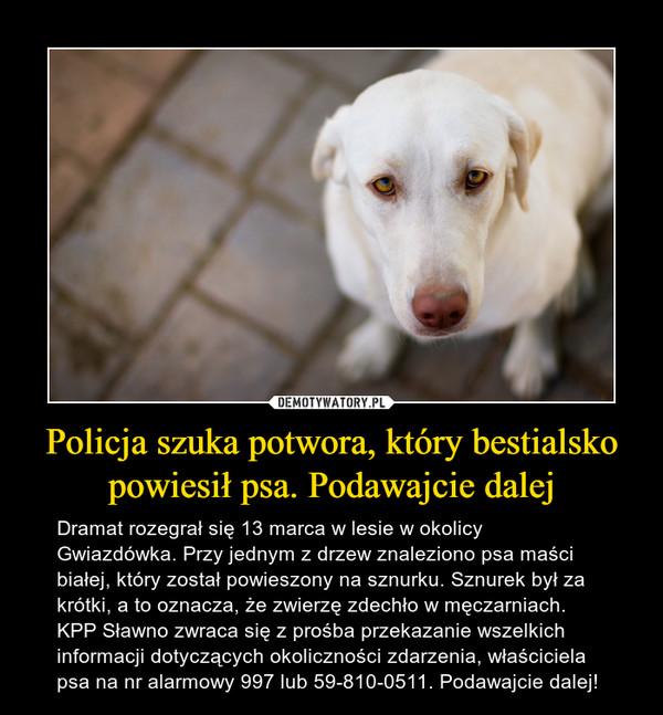 Policja szuka potwora, który bestialsko powiesił psa. Podawajcie dalej – Dramat rozegrał się 13 marca w lesie w okolicy Gwiazdówka. Przy jednym z drzew znaleziono psa maści białej, który został powieszony na sznurku. Sznurek był za krótki, a to oznacza, że zwierzę zdechło w męczarniach. KPP Sławno zwraca się z prośba przekazanie wszelkich informacji dotyczących okoliczności zdarzenia, właściciela psa na nr alarmowy 997 lub 59-810-0511. Podawajcie dalej!