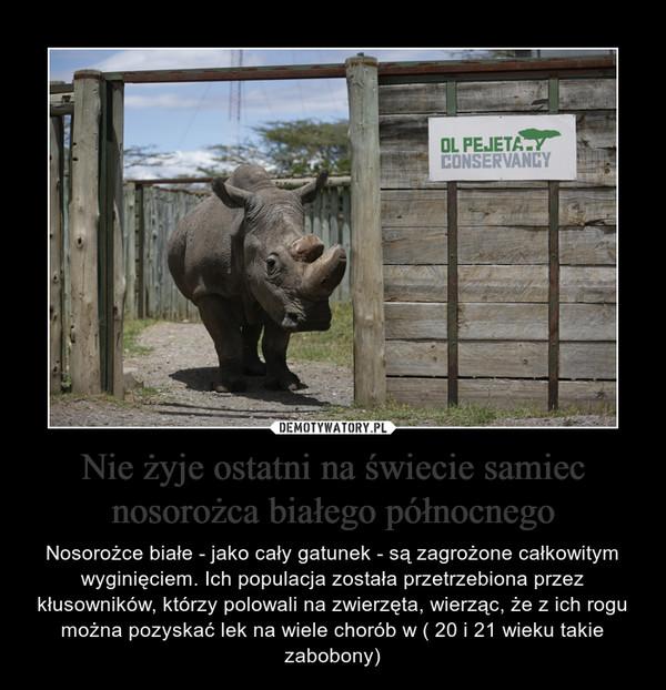 Nie żyje ostatni na świecie samiec nosorożca białego północnego – Nosorożce białe - jako cały gatunek - są zagrożone całkowitym wyginięciem. Ich populacja została przetrzebiona przez kłusowników, którzy polowali na zwierzęta, wierząc, że z ich rogu można pozyskać lek na wiele chorób w ( 20 i 21 wieku takie zabobony)