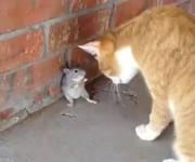 Te myszy to prawdziwi twardziele –