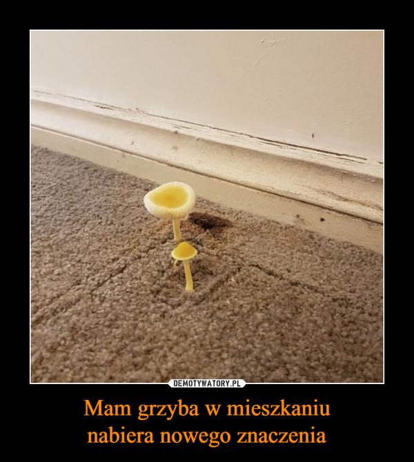Mam grzyba w mieszkaniunabiera nowego znaczenia –