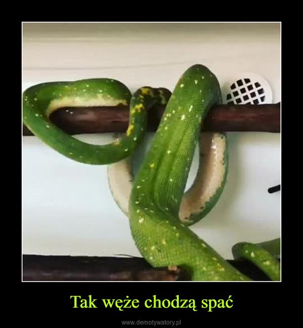 Tak węże chodzą spać –