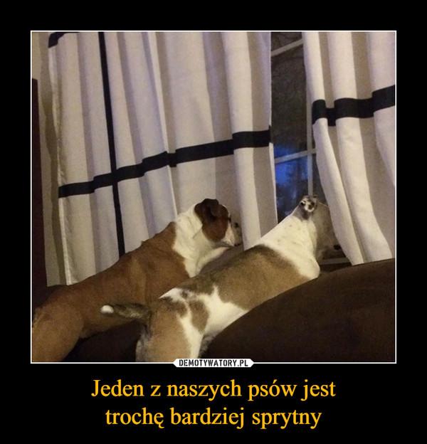 Jeden z naszych psów jesttrochę bardziej sprytny –