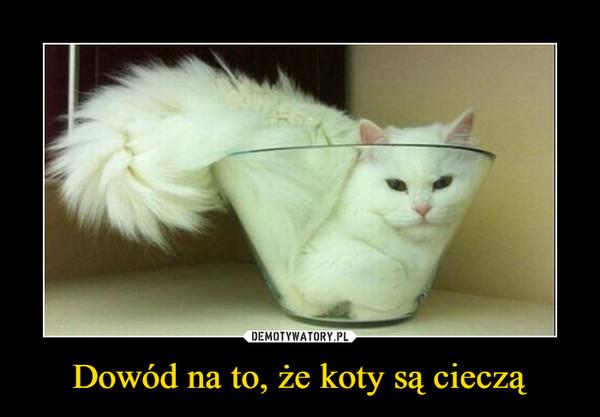 Dowód na to, że koty są cieczą –