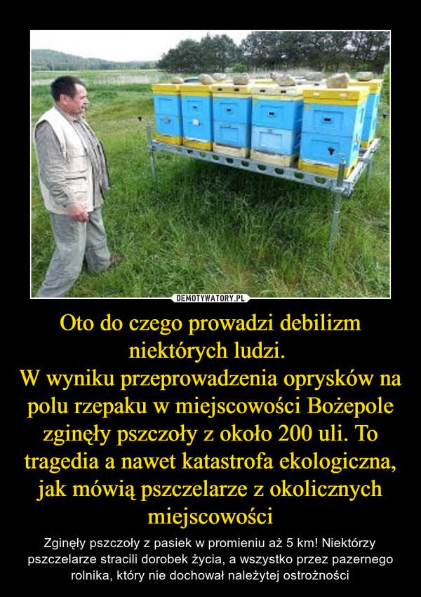 Oto do czego prowadzi debilizm niektórych ludzi. W wyniku przeprowadzenia oprysków na polu rzepaku w miejscowości Bożepole zginęły pszczoły z około 200 uli. To tragedia a nawet katastrofa ekologiczna, jak mówią pszczelarze z okolicznych miejscowości – Zginęły pszczoły z pasiek w promieniu aż 5 km! Niektórzy pszczelarze stracili dorobek życia, a wszystko przez pazernego rolnika, który nie dochował należytej ostrożności