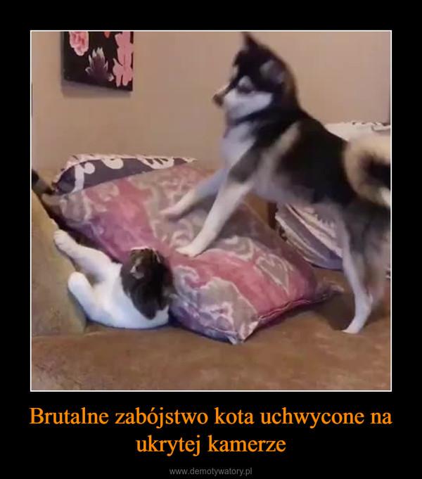 Brutalne zabójstwo kota uchwycone na ukrytej kamerze –