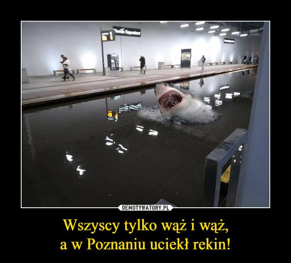 Wszyscy tylko wąż i wąż,a w Poznaniu uciekł rekin! –