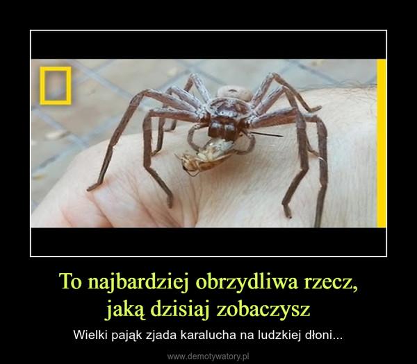 To najbardziej obrzydliwa rzecz,jaką dzisiaj zobaczysz – Wielki pająk zjada karalucha na ludzkiej dłoni...