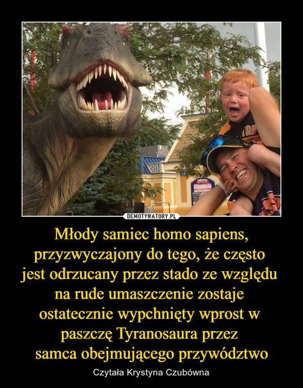 Młody samiec homo sapiens, przyzwyczajony do tego, że często jest odrzucany przez stado ze względu na rude umaszczenie zostaje ostatecznie wypchnięty wprost w paszczę Tyranosaura przez samca obejmującego przywództwo – Czytała Krystyna Czubówna
