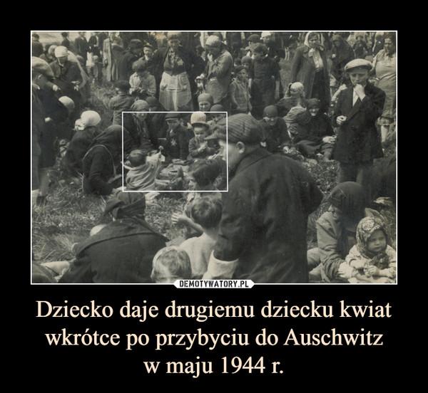 Dziecko daje drugiemu dziecku kwiat wkrótce po przybyciu do Auschwitzw maju 1944 r. –