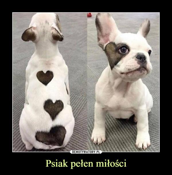 Psiak pełen miłości –