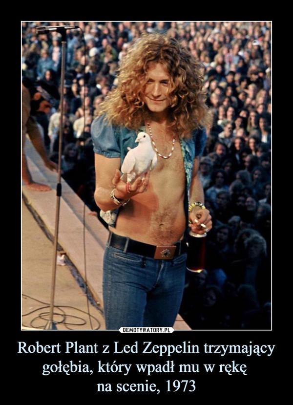 Robert Plant z Led Zeppelin trzymający gołębia, który wpadł mu w rękę na scenie, 1973 –