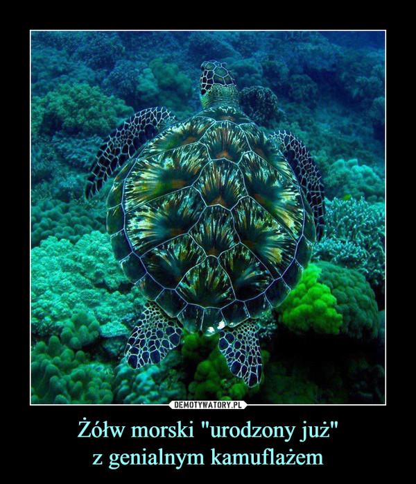 """Żółw morski """"urodzony już""""z genialnym kamuflażem –"""