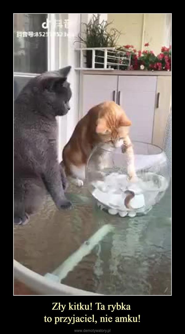 Zły kitku! Ta rybka to przyjaciel, nie amku! –
