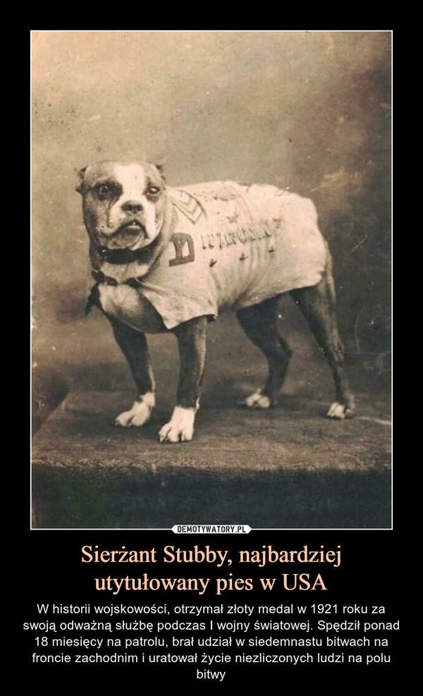 Sierżant Stubby, najbardziejutytułowany pies w USA – W historii wojskowości, otrzymał złoty medal w 1921 roku za swoją odważną służbę podczas I wojny światowej. Spędził ponad 18 miesięcy na patrolu, brał udział w siedemnastu bitwach na froncie zachodnim i uratował życie niezliczonych ludzi na polu bitwy