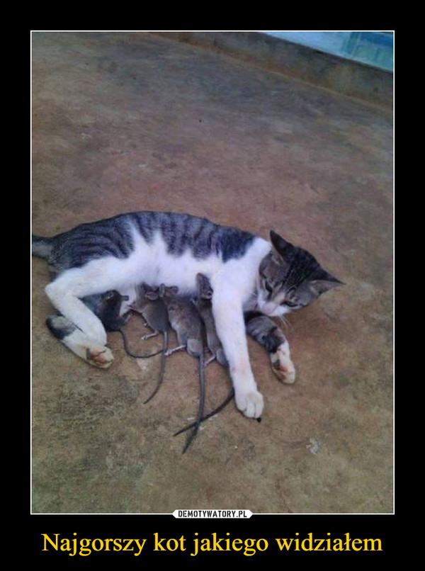 Najgorszy kot jakiego widziałem –