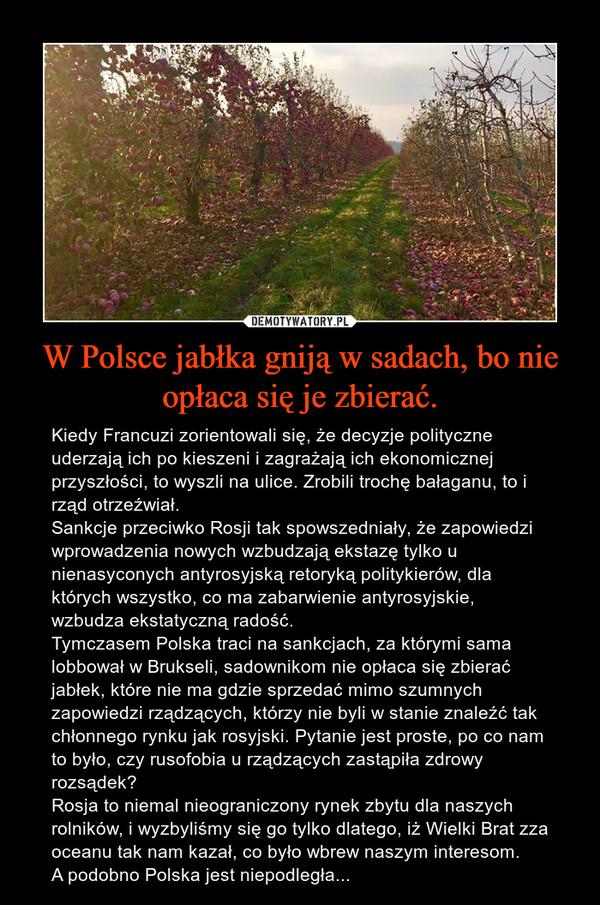 W Polsce jabłka gniją w sadach, bo nie opłaca się je zbierać. – Kiedy Francuzi zorientowali się, że decyzje polityczne uderzają ich po kieszeni i zagrażają ich ekonomicznej przyszłości, to wyszli na ulice. Zrobili trochę bałaganu, to i rząd otrzeźwiał.Sankcje przeciwko Rosji tak spowszedniały, że zapowiedzi wprowadzenia nowych wzbudzają ekstazę tylko u nienasyconych antyrosyjską retoryką politykierów, dla których wszystko, co ma zabarwienie antyrosyjskie, wzbudza ekstatyczną radość.Tymczasem Polska traci na sankcjach, za którymi sama lobbował w Brukseli, sadownikom nie opłaca się zbierać jabłek, które nie ma gdzie sprzedać mimo szumnych zapowiedzi rządzących, którzy nie byli w stanie znaleźć tak chłonnego rynku jak rosyjski. Pytanie jest proste, po co nam to było, czy rusofobia u rządzących zastąpiła zdrowy rozsądek? Rosja to niemal nieograniczony rynek zbytu dla naszych rolników, i wyzbyliśmy się go tylko dlatego, iż Wielki Brat zza oceanu tak nam kazał, co było wbrew naszym interesom.A podobno Polska jest niepodległa...