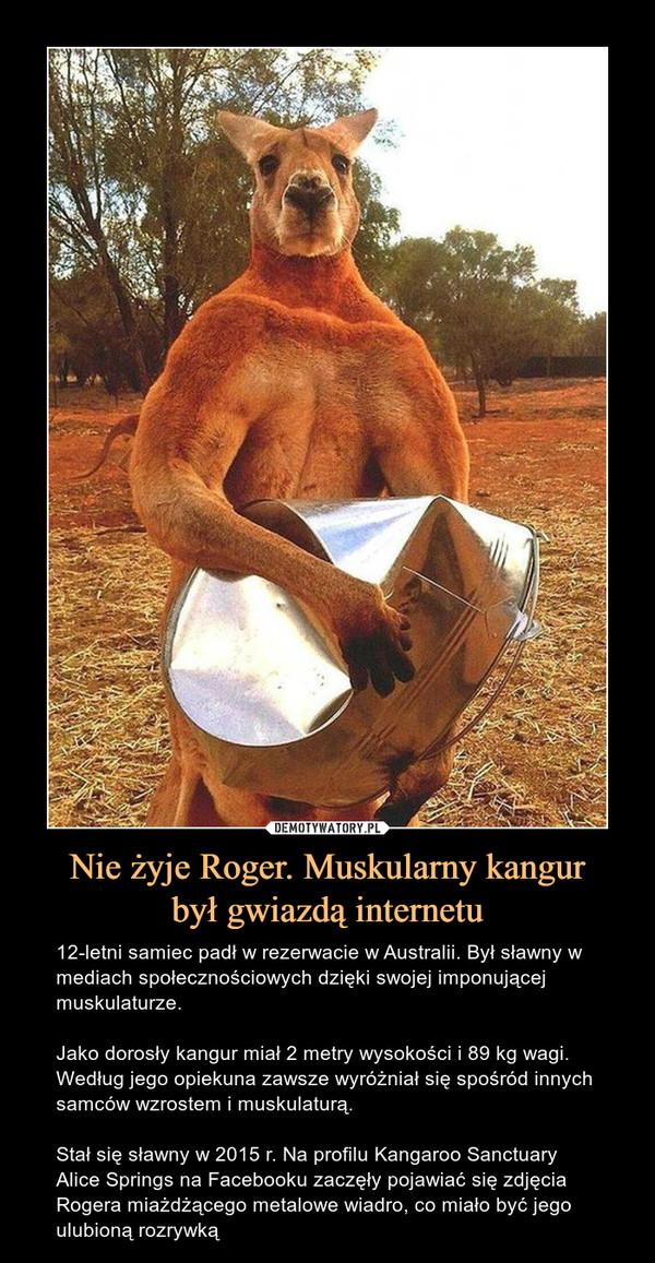 Nie żyje Roger. Muskularny kangurbył gwiazdą internetu – 12-letni samiec padł w rezerwacie w Australii. Był sławny w mediach społecznościowych dzięki swojej imponującej muskulaturze.Jako dorosły kangur miał 2 metry wysokości i 89 kg wagi. Według jego opiekuna zawsze wyróżniał się spośród innych samców wzrostem i muskulaturą. Stał się sławny w 2015 r. Na profilu Kangaroo Sanctuary Alice Springs na Facebooku zaczęły pojawiać się zdjęcia Rogera miażdżącego metalowe wiadro, co miało być jego ulubioną rozrywką