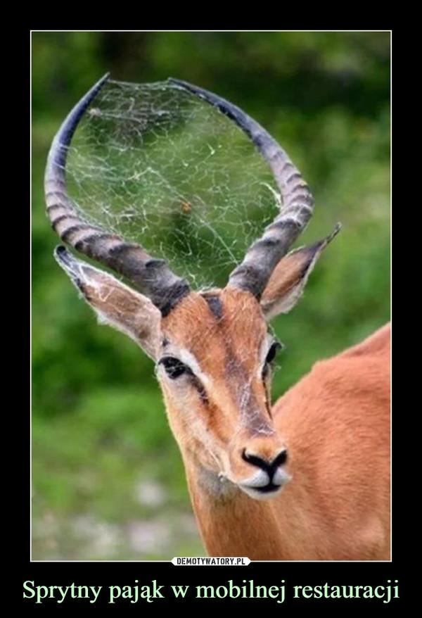 Sprytny pająk w mobilnej restauracji –