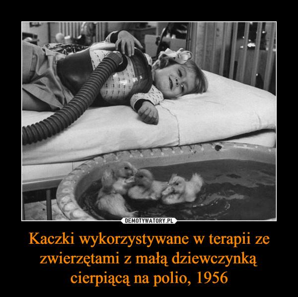 Kaczki wykorzystywane w terapii ze zwierzętami z małą dziewczynką cierpiącą na polio, 1956 –