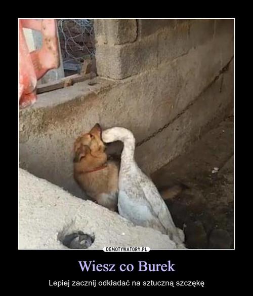Wiesz co Burek