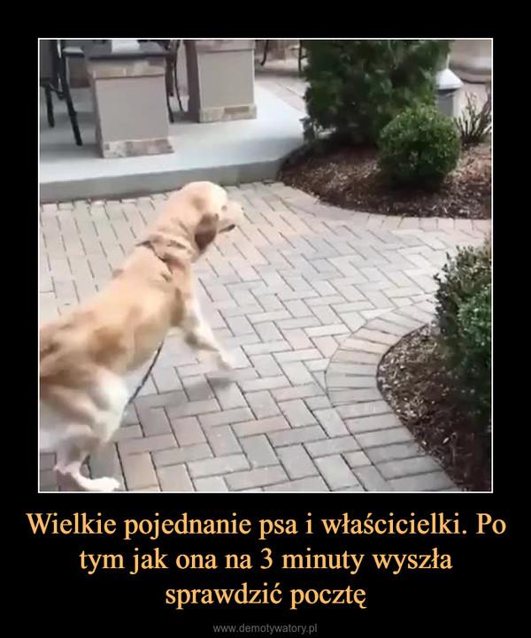 Wielkie pojednanie psa i właścicielki. Po tym jak ona na 3 minuty wyszła sprawdzić pocztę –