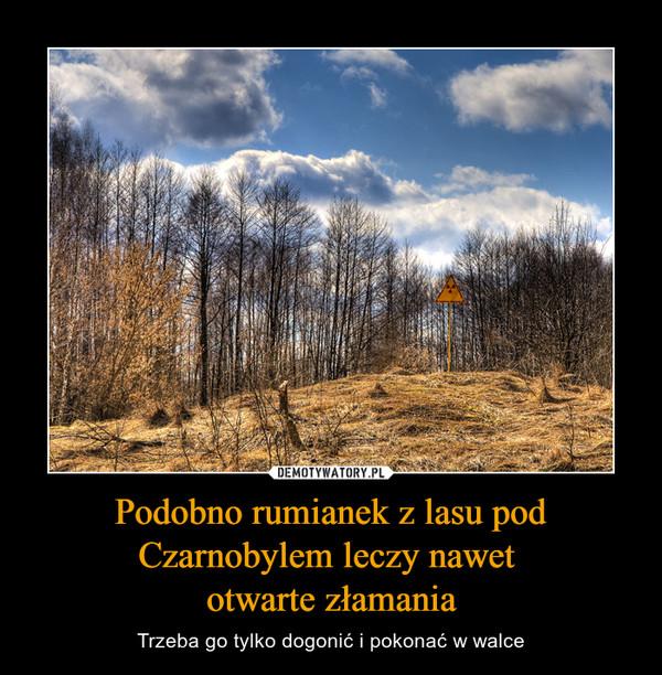 Podobno rumianek z lasu pod Czarnobylem leczy nawet otwarte złamania – Trzeba go tylko dogonić i pokonać w walce