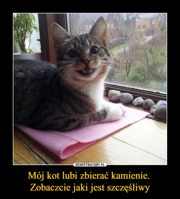 Mój kot lubi zbierać kamienie. Zobaczcie jaki jest szczęśliwy –