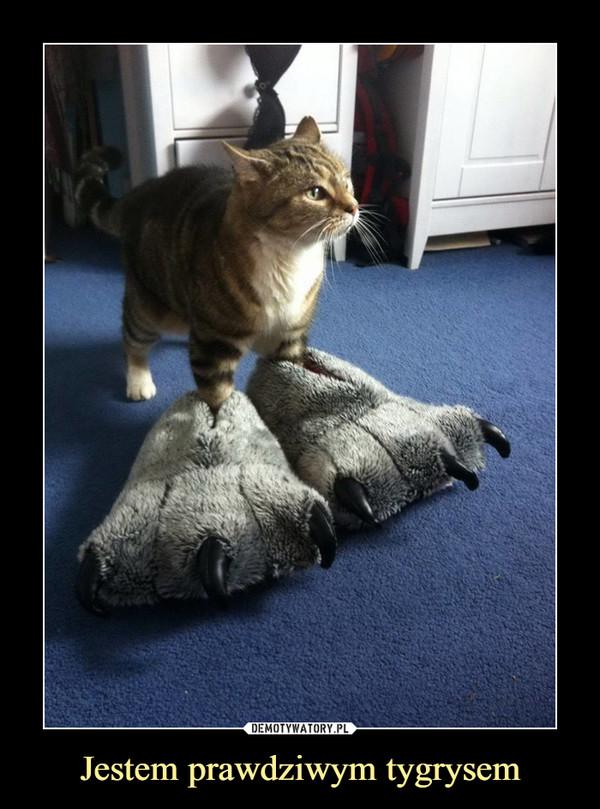 Jestem prawdziwym tygrysem –