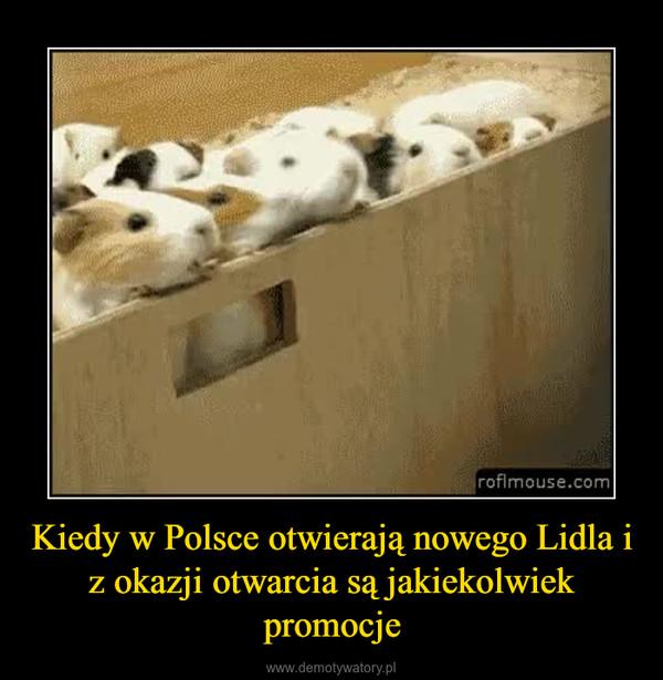 Kiedy w Polsce otwierają nowego Lidla i z okazji otwarcia są jakiekolwiek promocje –
