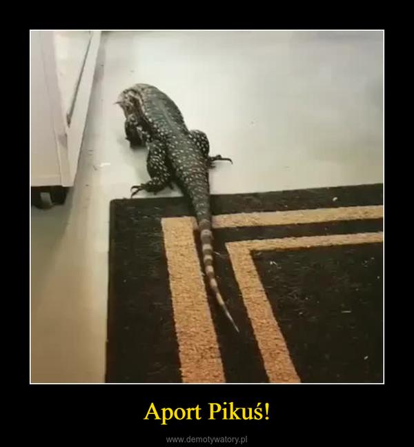 Aport Pikuś! –
