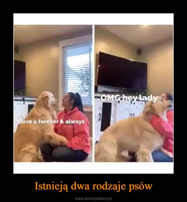 Istnieją dwa rodzaje psów –