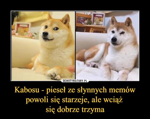 Kabosu - pieseł ze słynnych memów powoli się starzeje, ale wciąż się dobrze trzyma –