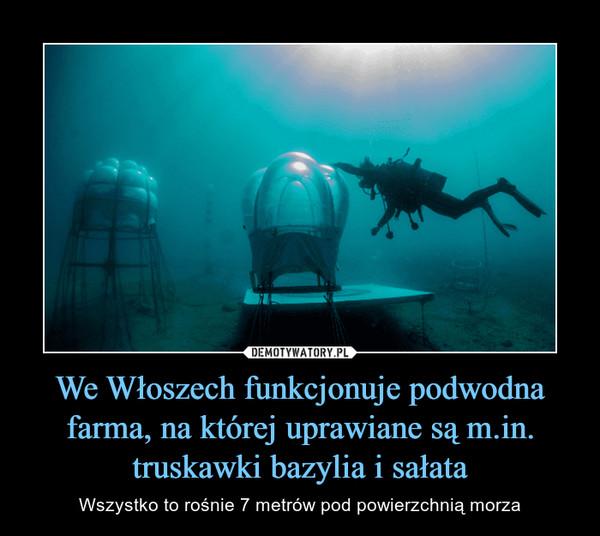 We Włoszech funkcjonuje podwodna farma, na której uprawiane są m.in. truskawki bazylia i sałata – Wszystko to rośnie 7 metrów pod powierzchnią morza