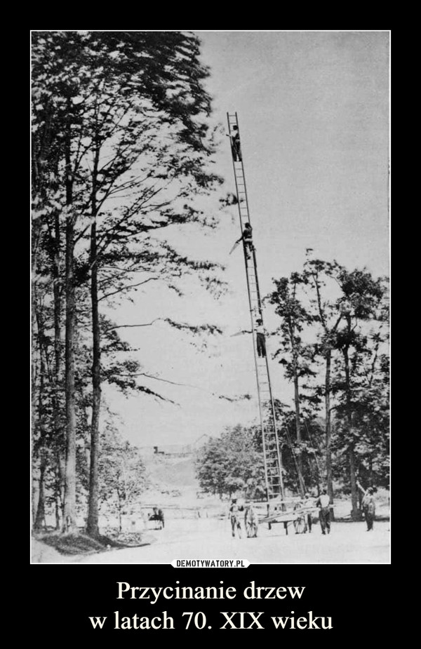 Przycinanie drzeww latach 70. XIX wieku –