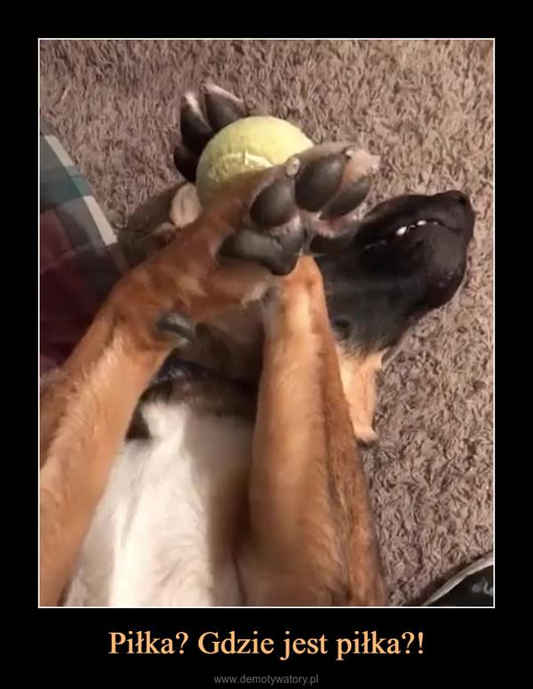 Piłka? Gdzie jest piłka?! –