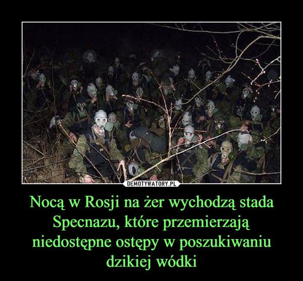 Nocą w Rosji na żer wychodzą stada Specnazu, które przemierzają niedostępne ostępy w poszukiwaniu dzikiej wódki –