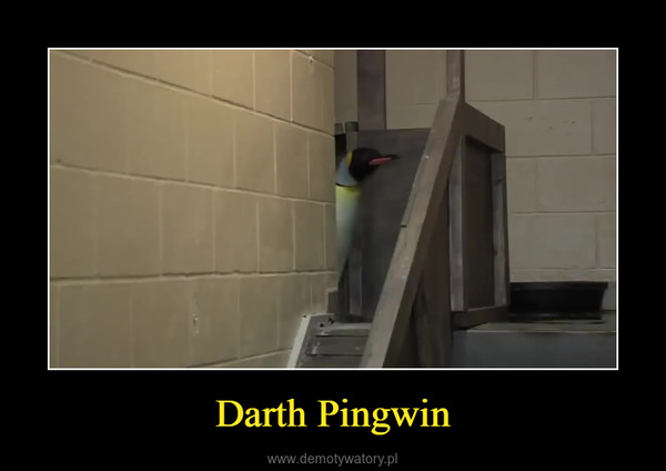 Darth Pingwin –