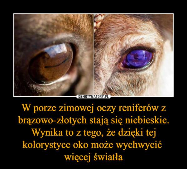 W porze zimowej oczy reniferów z brązowo-złotych stają się niebieskie. Wynika to z tego, że dzięki tej kolorystyce oko może wychwycić więcej światła –