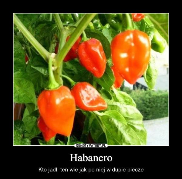 Habanero – Kto jadł, ten wie jak po niej w dupie piecze