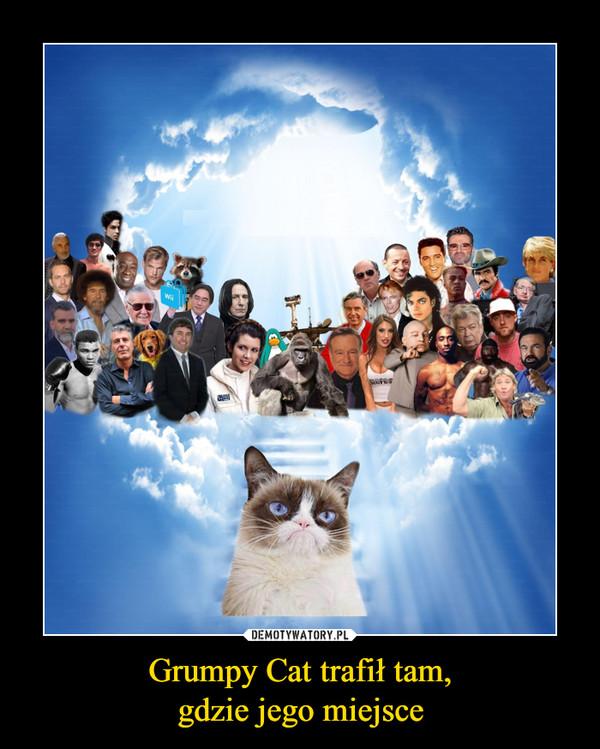 Grumpy Cat trafił tam,gdzie jego miejsce –