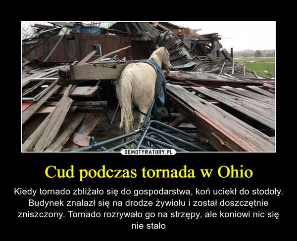 Cud podczas tornada w Ohio – Kiedy tornado zbliżało się do gospodarstwa, koń uciekł do stodoły. Budynek znalazł się na drodze żywiołu i został doszczętnie zniszczony. Tornado rozrywało go na strzępy, ale koniowi nic się nie stało