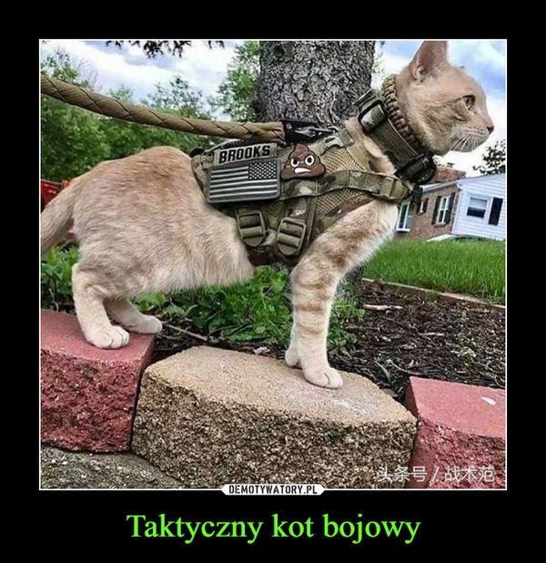Taktyczny kot bojowy –
