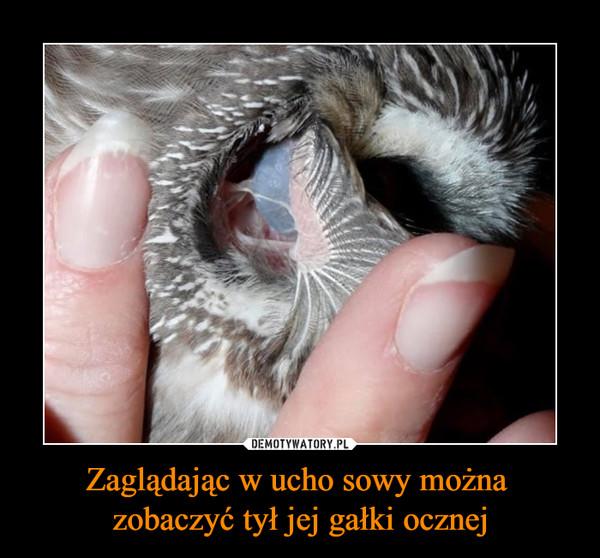 Zaglądając w ucho sowy można zobaczyć tył jej gałki ocznej –