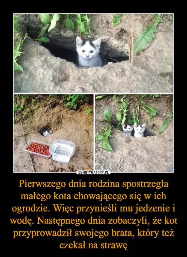 Pierwszego dnia rodzina spostrzegła małego kota chowającego się w ich ogrodzie. Więc przynieśli mu jedzenie i wodę. Następnego dnia zobaczyli, że kot przyprowadził swojego brata, który też czekał na strawę –