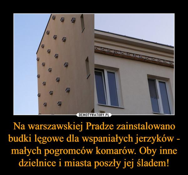 Na warszawskiej Pradze zainstalowano budki lęgowe dla wspaniałych jerzyków - małych pogromców komarów. Oby inne dzielnice i miasta poszły jej śladem! –